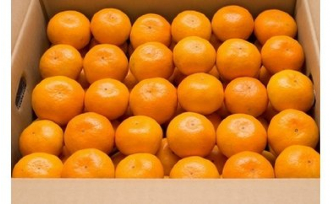 血糖値を下げる温州ミカン