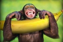 サッカーの試合でバナナに注意!それ、人種差別ですからー!